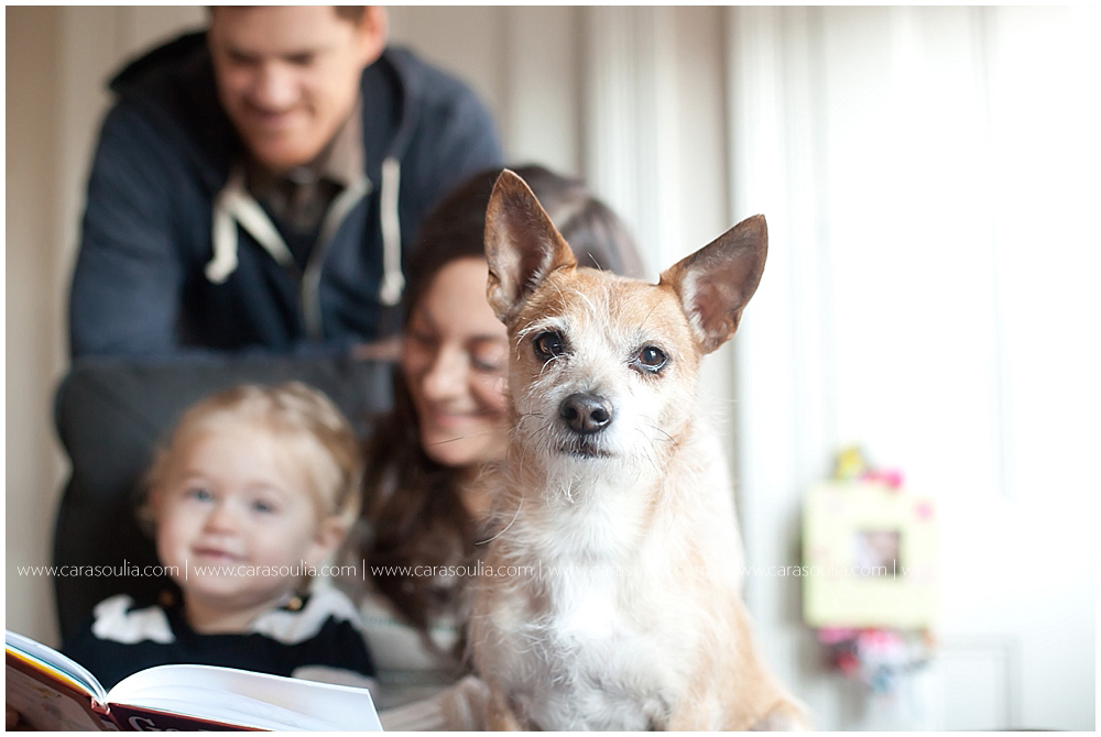 family photos with dog cara soulia photography