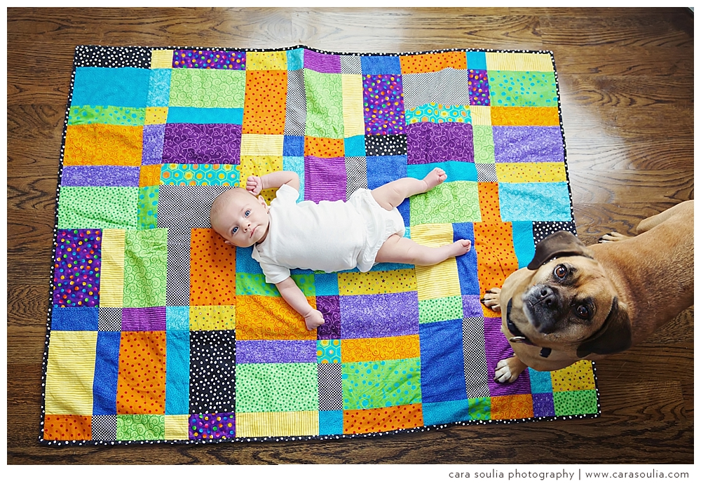 jp newborn photography with dogs