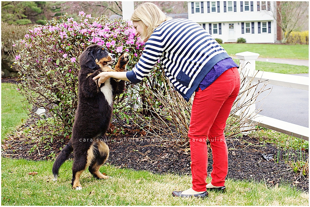 mom and burnese dog photographer boston ma
