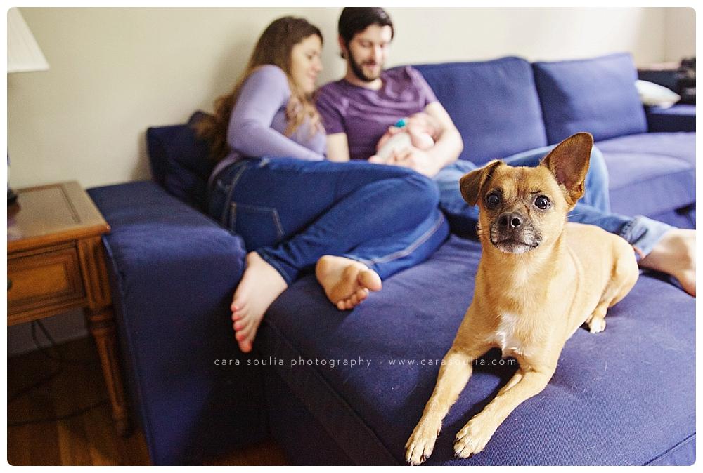 newborn photos with dog boston ma