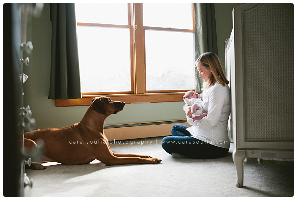 newborn photo session with dog boston ma