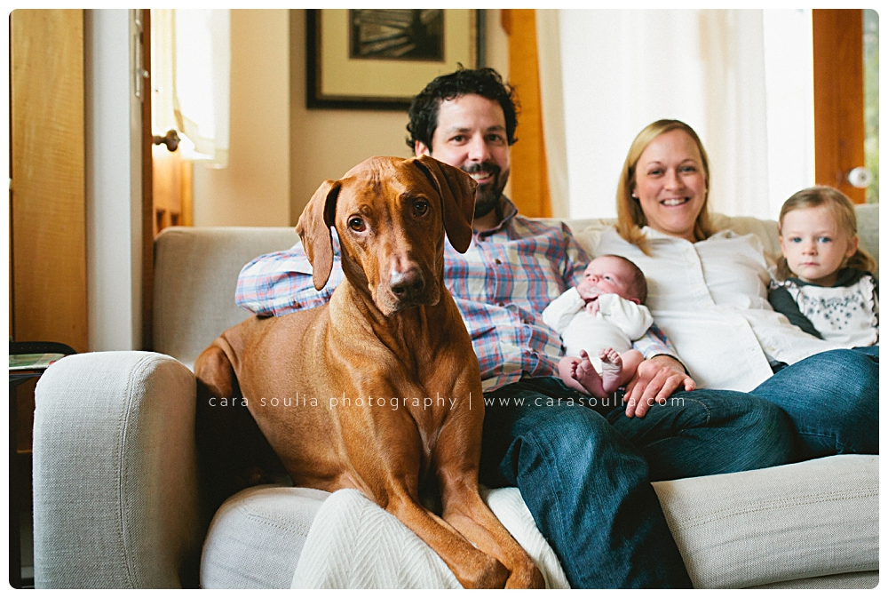 newborn session at home with family dog cara soulia boston