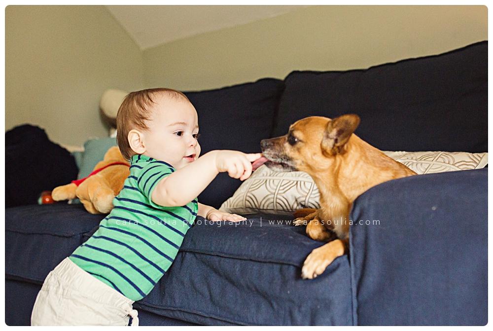 photo session with dog boston ma