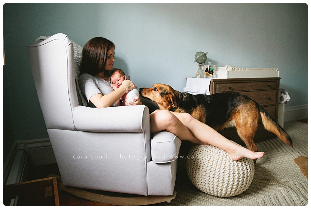 best-back-bay-newborn-photographer-with-dog-cara-soulia