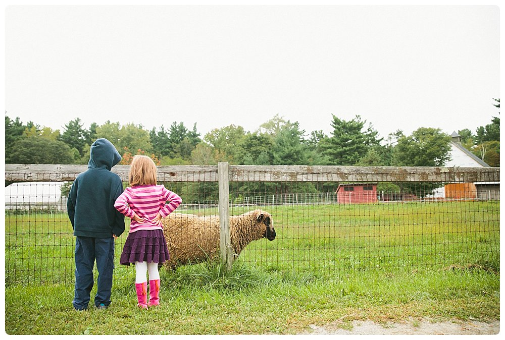 Kids watch the sheep at Drumlin Farm in Lincoln, Massachusetts