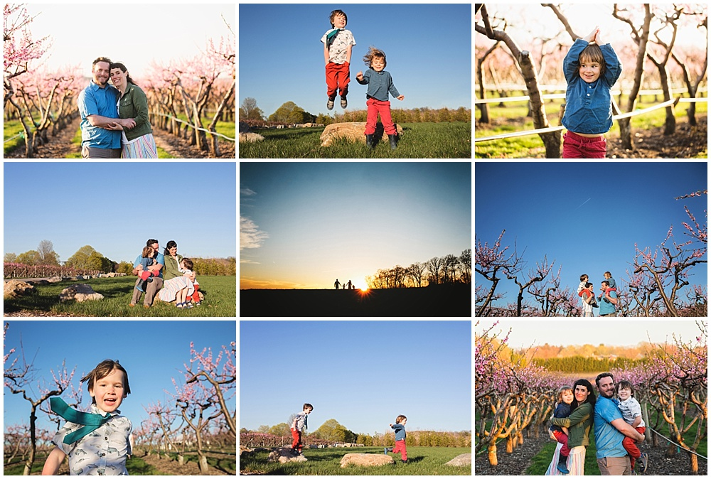 apple orchard in springtime | Boston Family Photographer