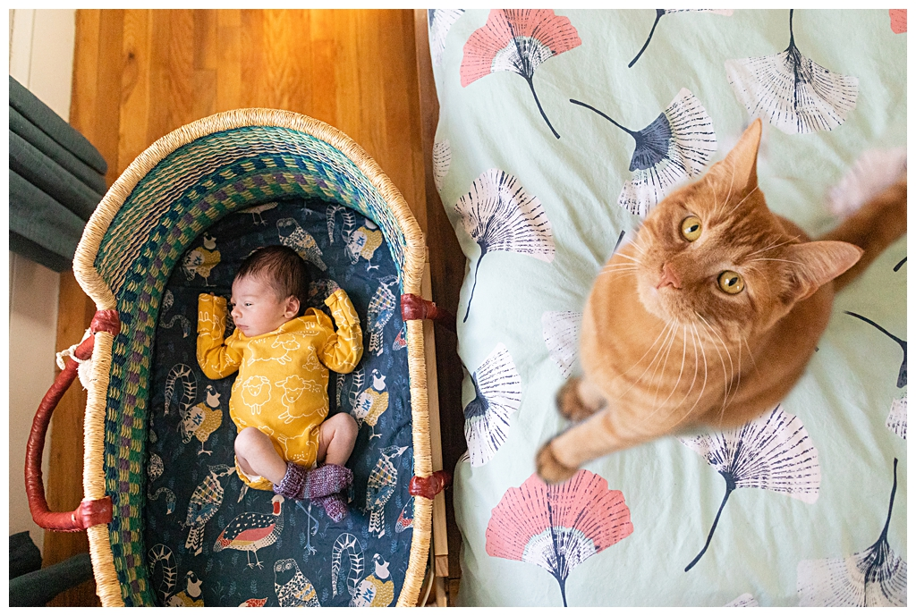 Adorable Kitty with Newborn baby at Boston newborn photography session